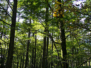 300px-Forest01s2048.jpg